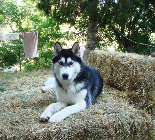Nos loups grandissent, postez nous vos photos - Page 2 Dsc01532
