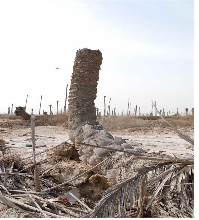 مقابر النخيل الجماعيه 3610