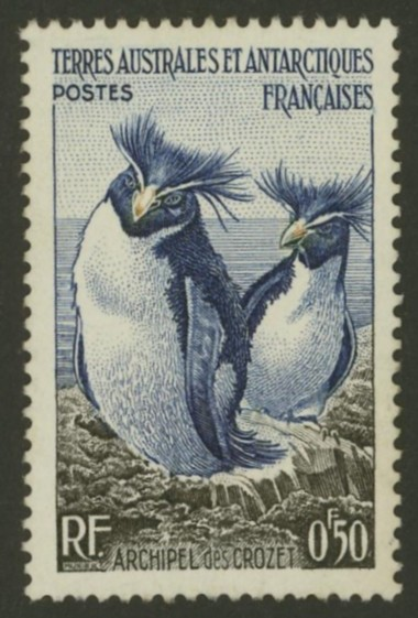 Pinguine Antarc10