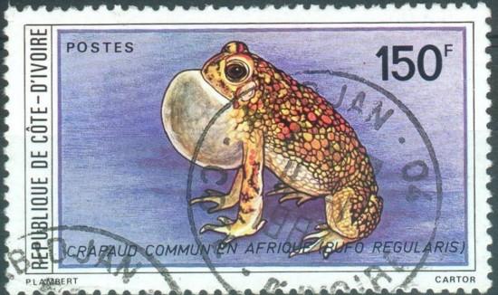 Frösche, Kröten und andere Lurche Frosch10