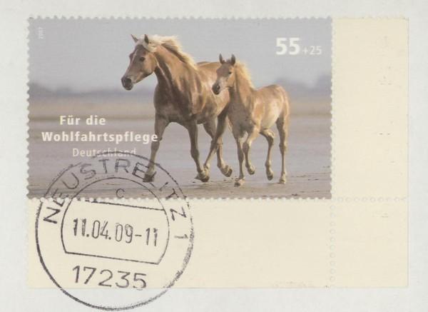 Pferde - Seite 3 Pferd_16