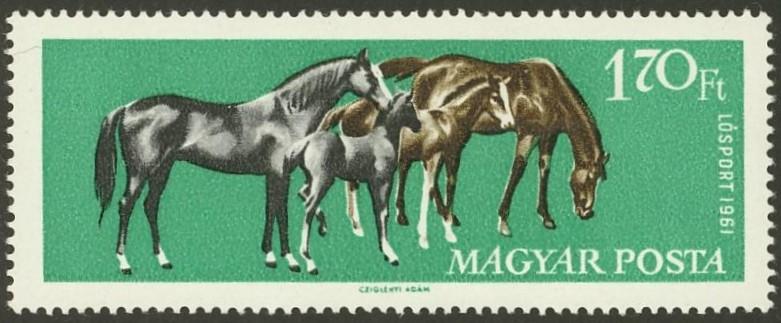Pferde - Seite 3 Pferde37