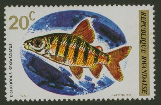 Fische Ruanda14