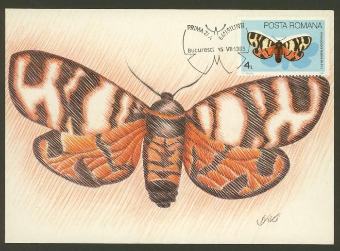 Schmetterlinge Schmet10