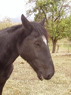 BELLA - ONC née en 1989 - adoptée en décembre 2009 Bella_15