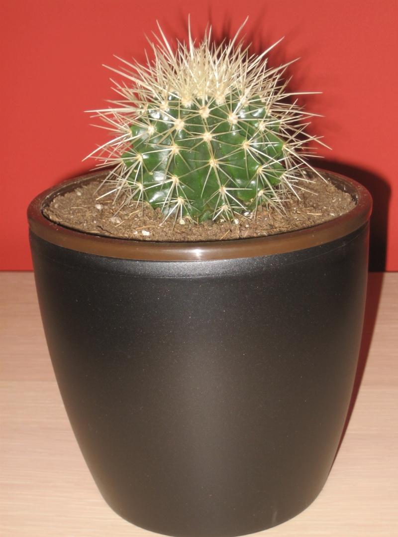 Echinocactus Grusonii Img_0525