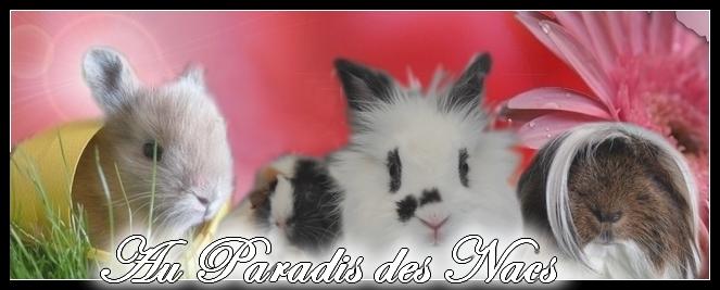 AU PARADIS DES NAC