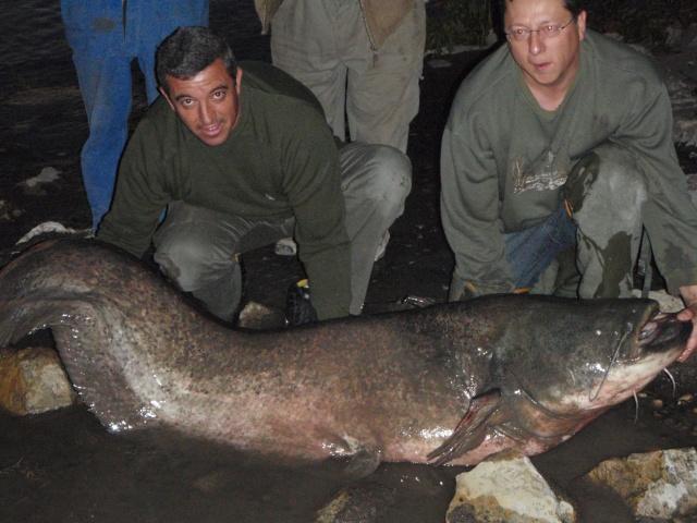 durance en crue poisson trappu Pa230010
