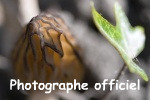 Groupe photographes officiels - Page 3 Morill10