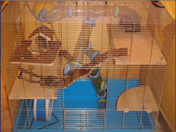 Cage 77x77x48 Equipée Hamster 80 euros dans le 92 Cageh10
