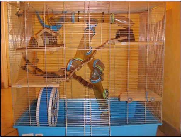 Cage 77x77x48 Equipée Hamster 80 euros dans le 92 Face10