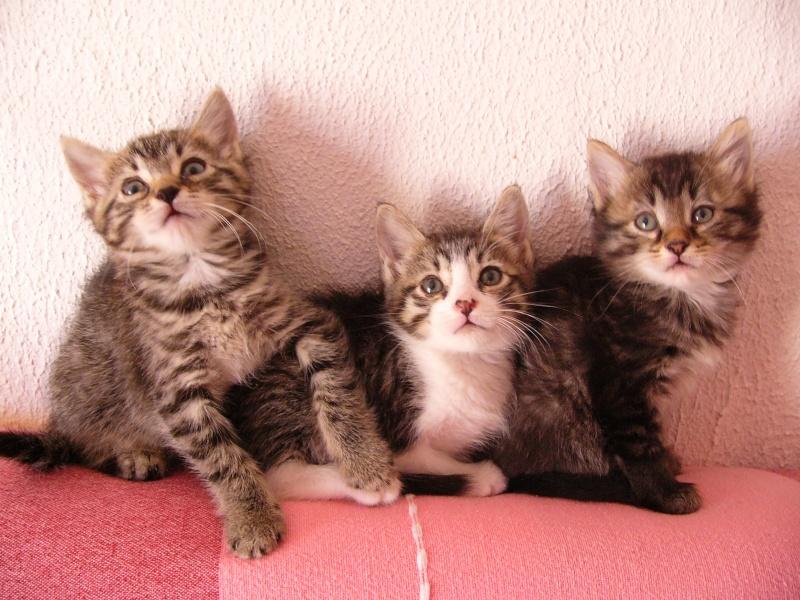 Echange de chats... - Page 4 P1100210