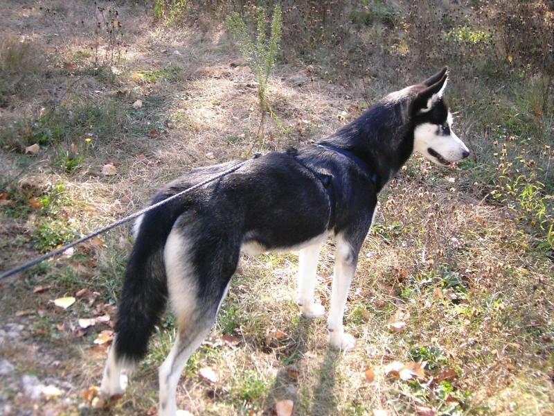 Nos loups grandissent, postez nous vos photos Dsci0069