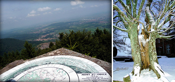 Le Mont Sainte-Odile (67) Sans_t22