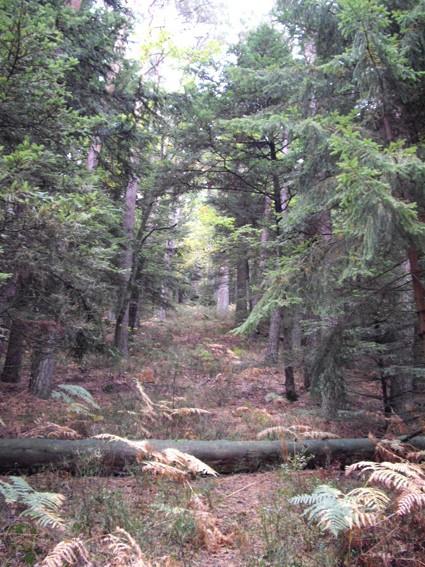 Le Mont Sainte-Odile (67) Wach112