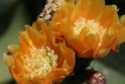 premice du printemps.... - Page 26 Dsc01419