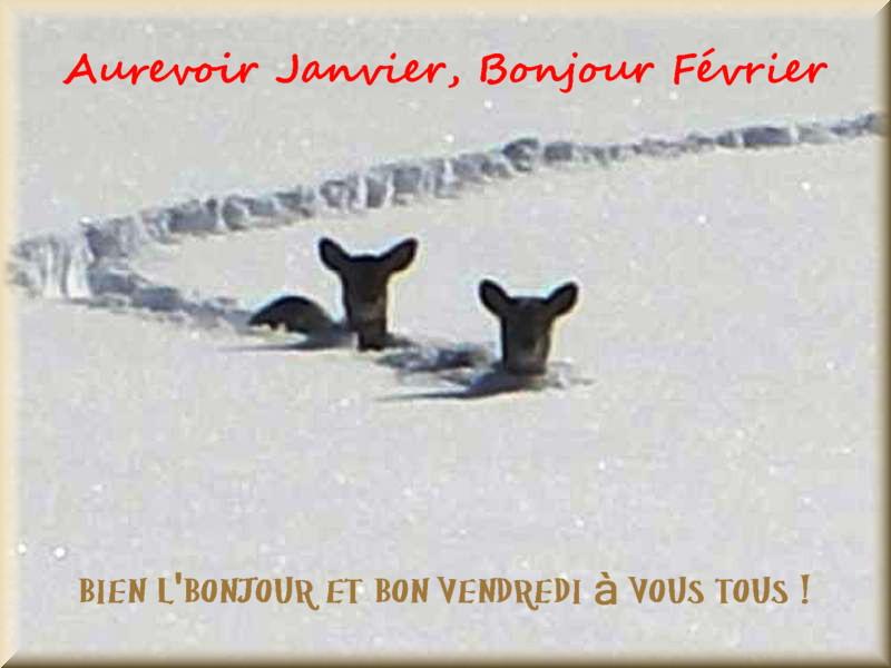 Les bonjours et contacts jounaliers du Mois de Février 2019 01021910