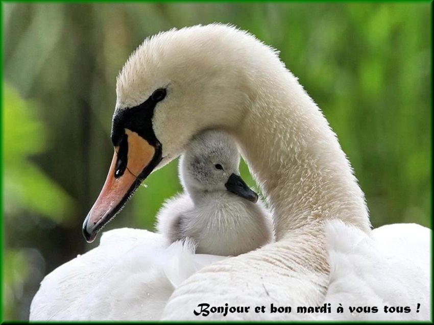 Les bonjours et contacts jounaliers du Mois de Juin 2019 11061910