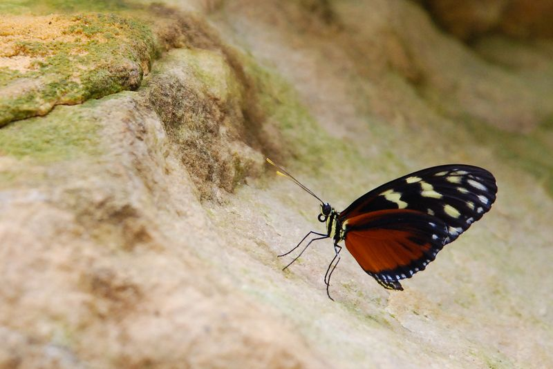 Sortie photo aux jardins des Papillons à Grevenmacher (L) 04 AVRIL 2009 - Les photos Dsc_0111