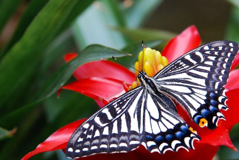 Sortie photo aux jardins des Papillons à Grevenmacher (L) 04 AVRIL 2009 - Les photos Dsc_0112