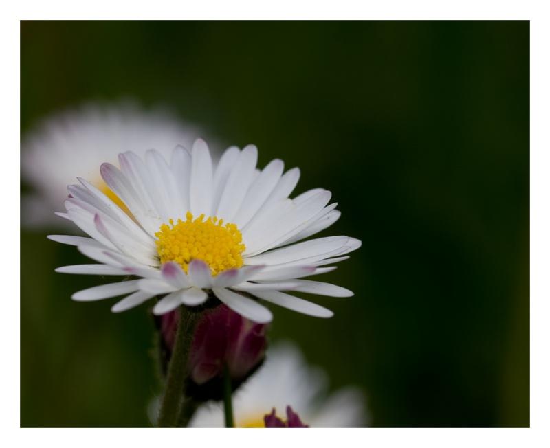 petites fleurs Img_0210