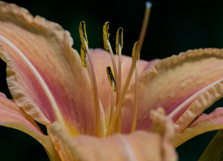 essai sur fleur Img_4016