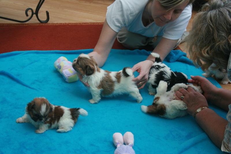 puppy pics 5 weeks 5pups510