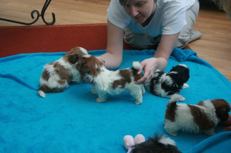 puppy pics 5 weeks Pups5w11