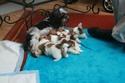 puppy pics 5 weeks Daisy410