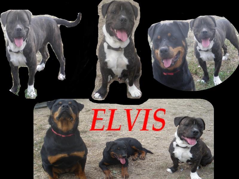 elvis croise staff 2ans Elvis_10