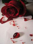 Love Stories 26706311