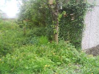 Pictures of the Wildlife Garden 00811