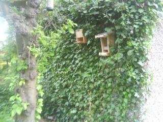 Pictures of the Wildlife Garden 00910