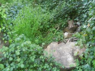 Pictures of the Wildlife Garden 04710