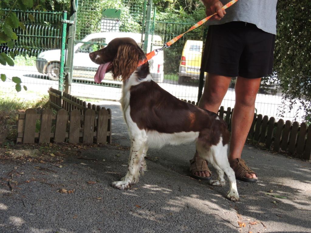Adoption de BONNIE-Juillet 2018. Diman116