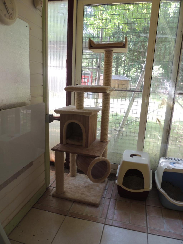 Don d'un nouvel arbre à chats. Dimanc84