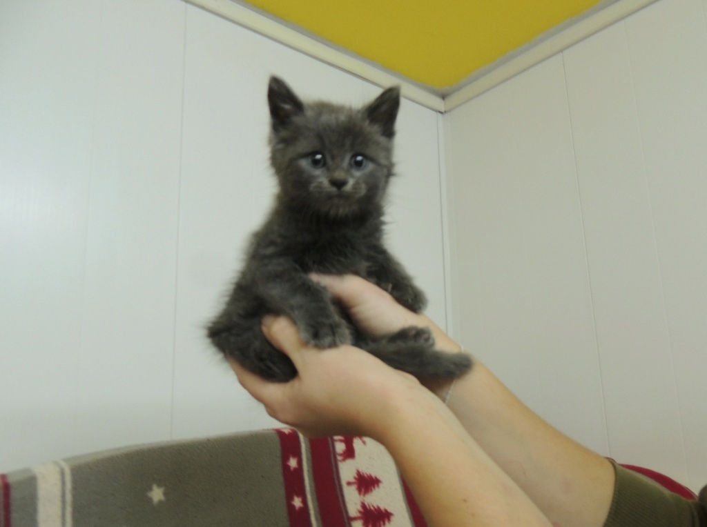 Réservation de 2 chatons, GREY et THEA et adoption -octobre 2020 Dscn1725
