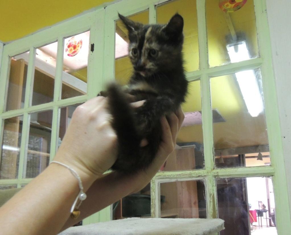 Réservation de 2 chatons, GREY et THEA et adoption -octobre 2020 Dscn1726