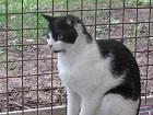 Les chats parrainés Felix_10