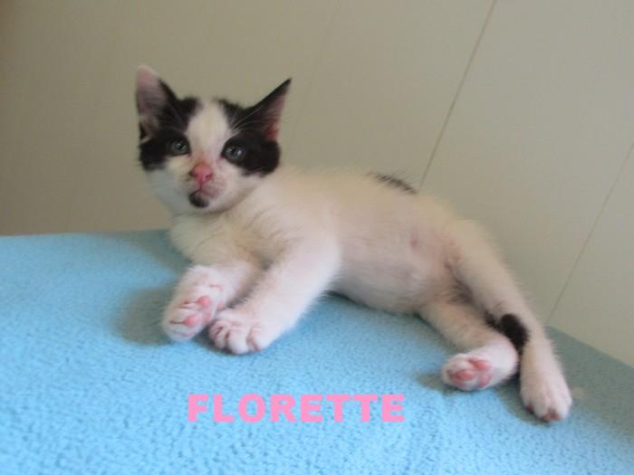 Réservation de Florette et adoption- septembre 2020 Floret10