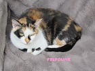 Les Chats en attente de parrainage Fripou12