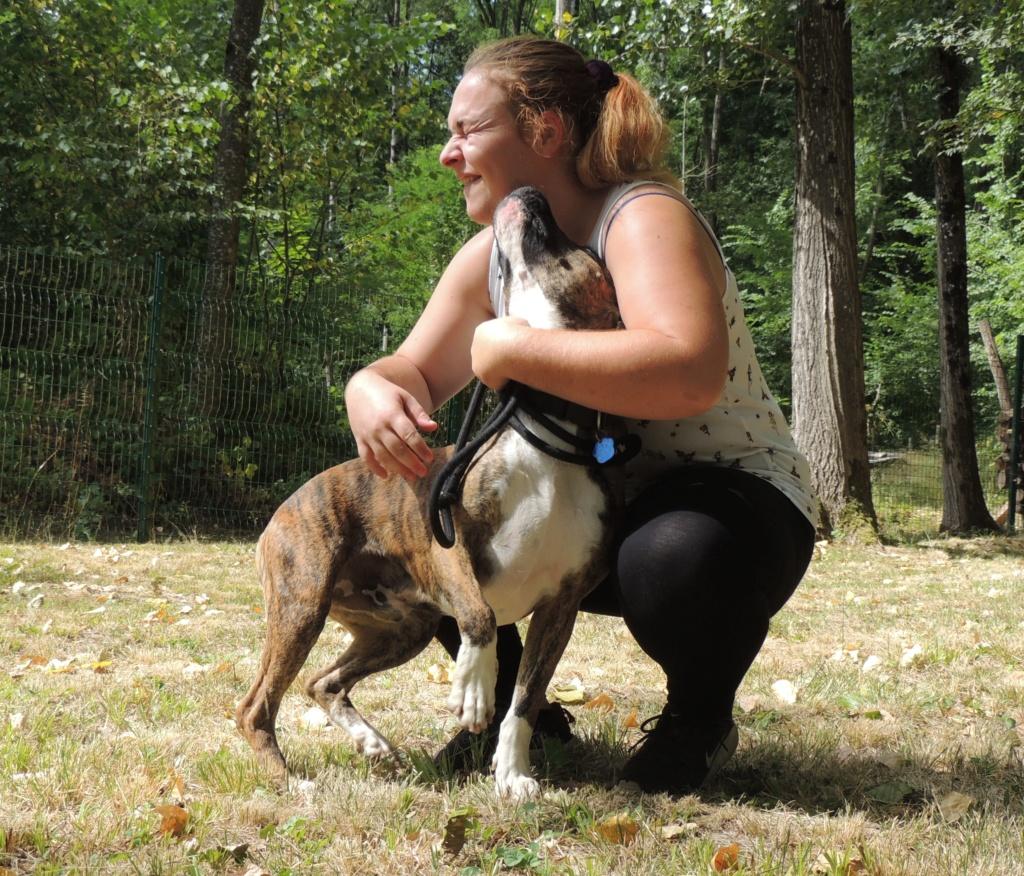 RILEY.Mâle Boxer x Bull terrier de 2015 Mercr129
