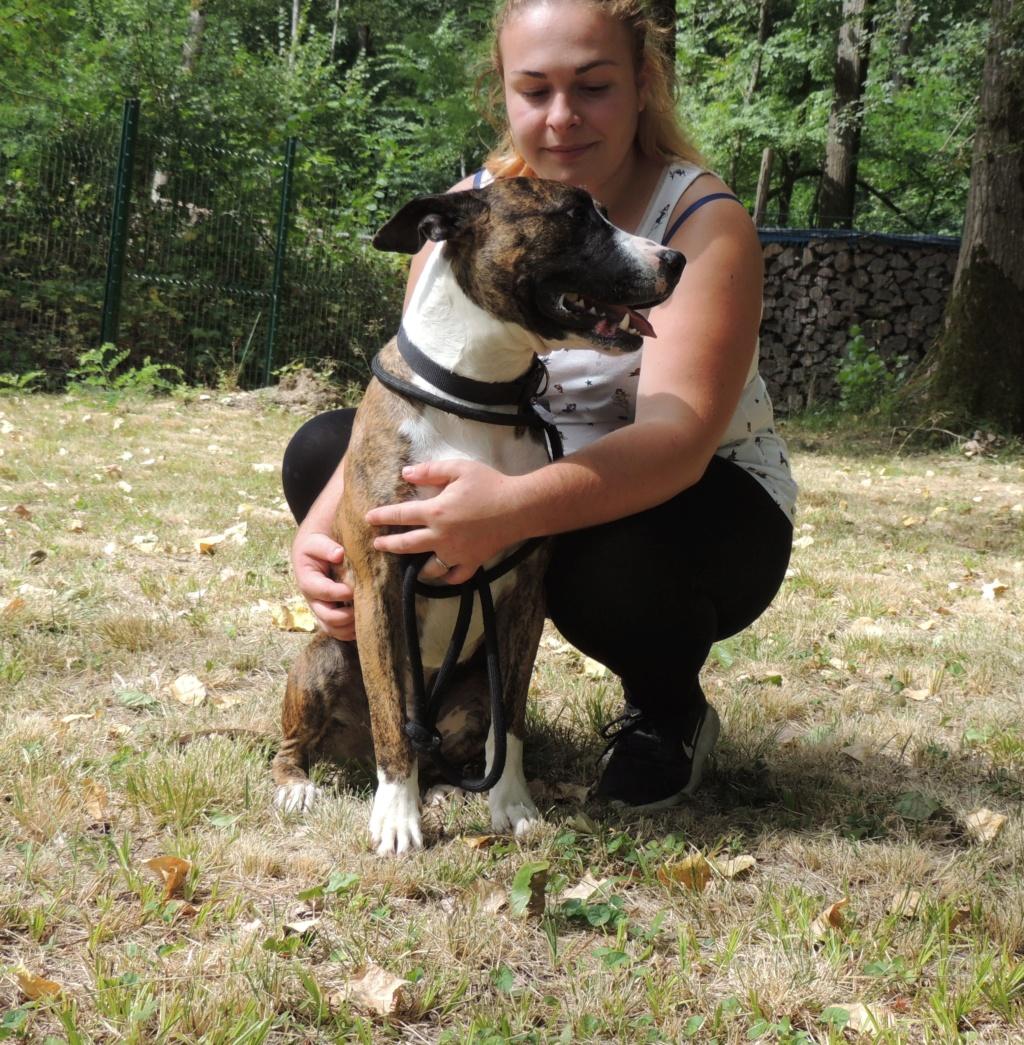 RILEY.Mâle Boxer x Bull terrier de 2015 Mercr130