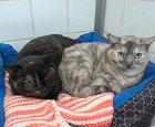Les chats parrainés Metis_11