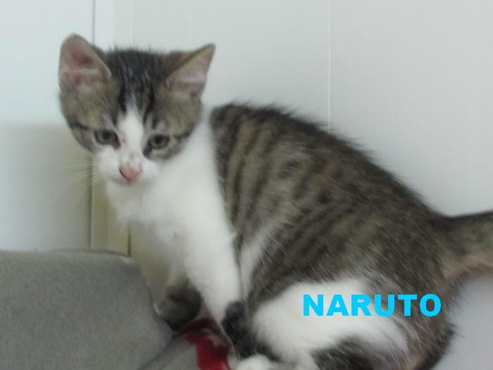 Adoption de NARUTO- Octobre 2020 Naruto11