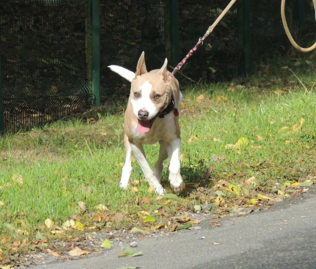 Adoption de OLLY- Octobre 2020 Olly_210
