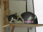 Les Chats en attente de parrainage Paloma11