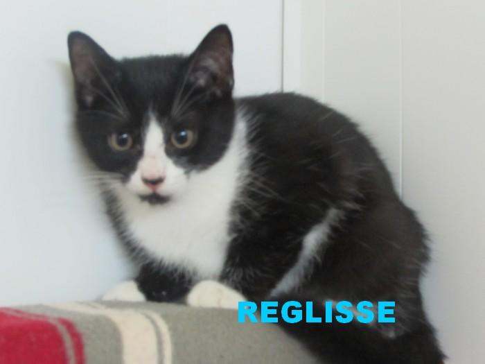 Adoption de REGLISSE  Reglis10
