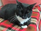 Les chats parrainés Socque11