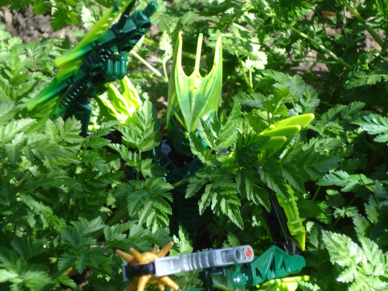 [images] Photos/fonds d'écran bionicles Dsc03310